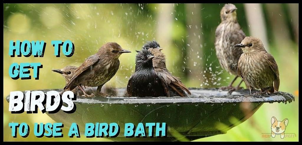 Best Bird Baths attracting birds How to get birds to use a bird bath