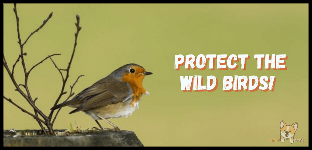 Best food for wild birds how to take care of a wild bird