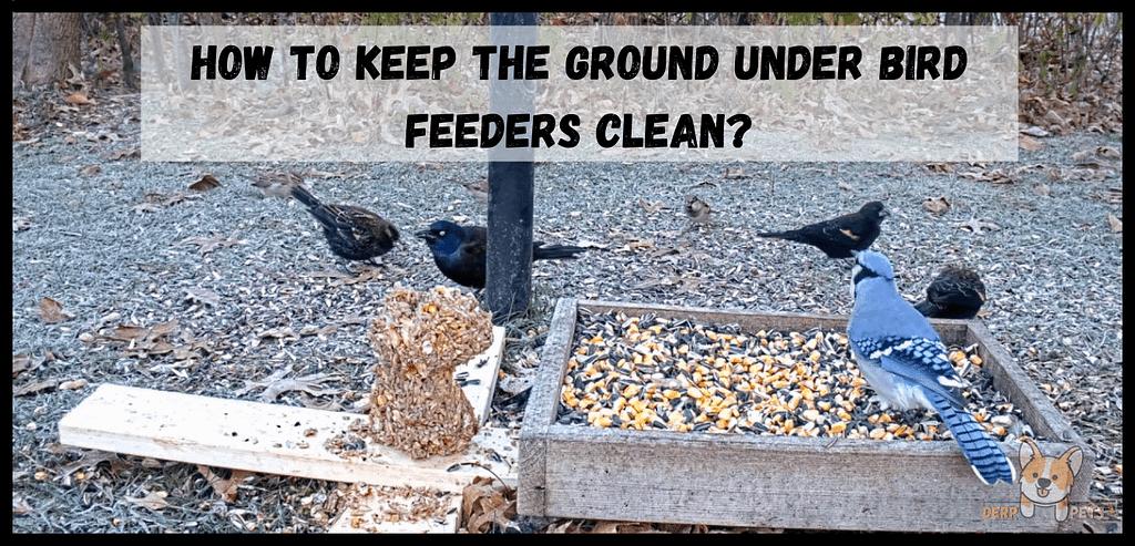 How to keep ground under bird feeders clean Best food for wild birds