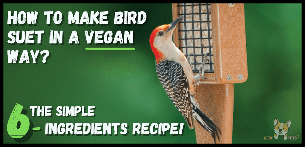 How to make bird suet with Crisco The simple 6-ingredients recipe!-min