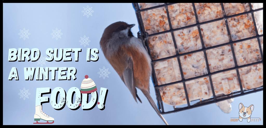 How to make bird suet with Crisco.-min