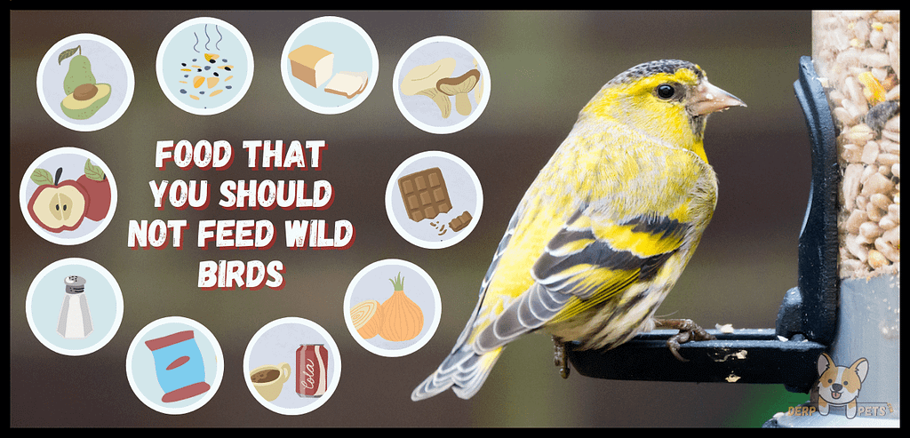 What should you not feed wild birds Best food for wild birds