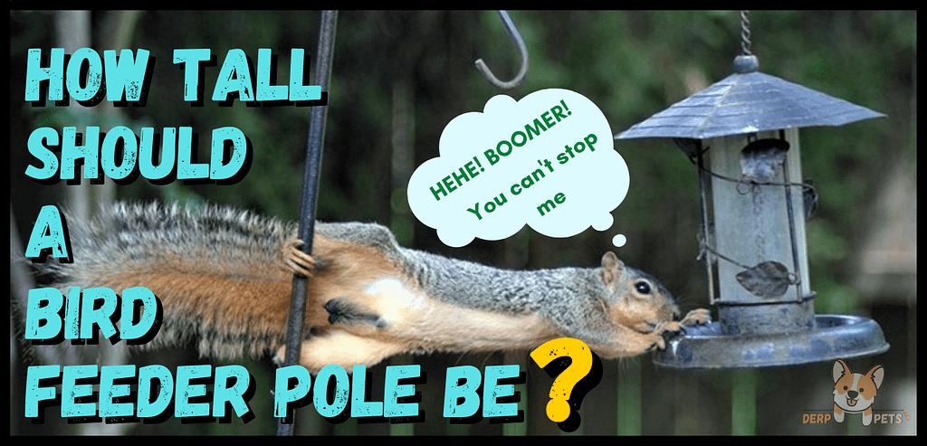Window bird feeders do they work - Best pole mounted bird feeders squirrel proof .