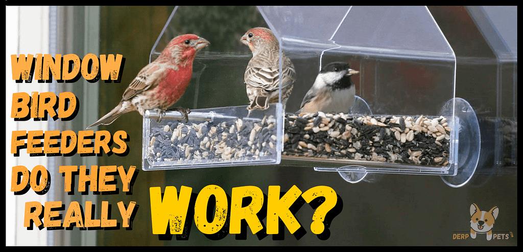 Window bird feeders do they work - Best pole mounted bird feeders squirrel proof