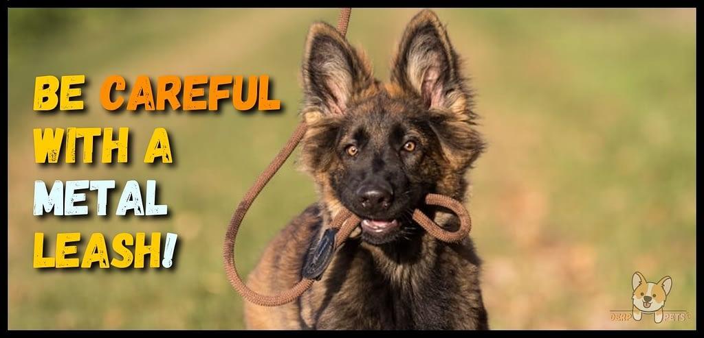 Best leash for german shepherds