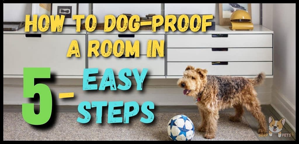 How to dog-proof a room