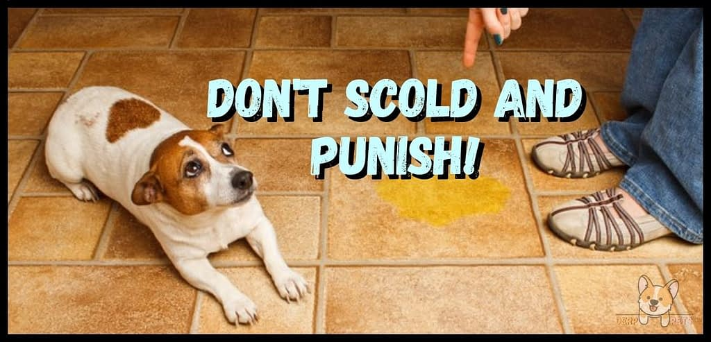 How to potty train an older dog in an apartment