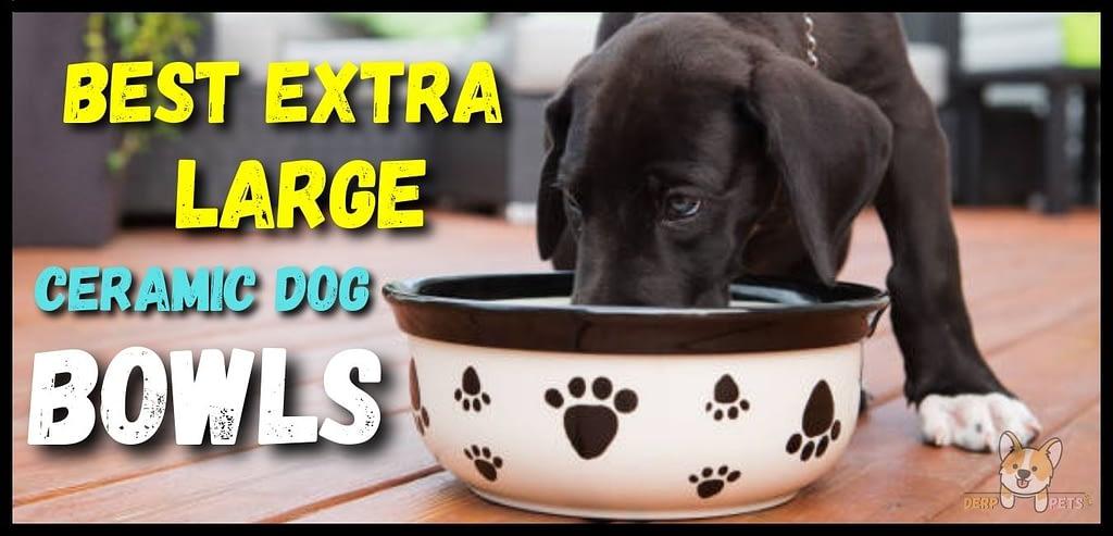 Top 10 Best extra large ceramic dog bowls
