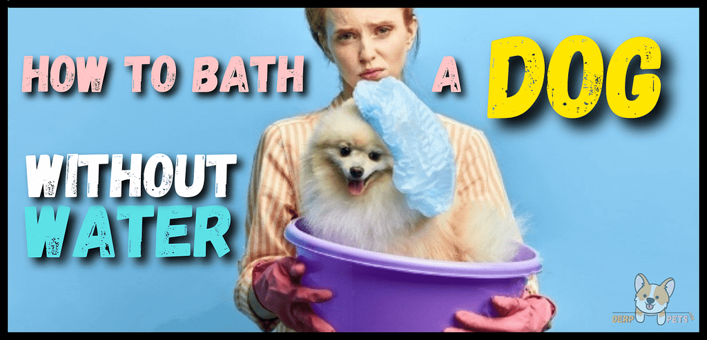 How to give a dog a bath without water