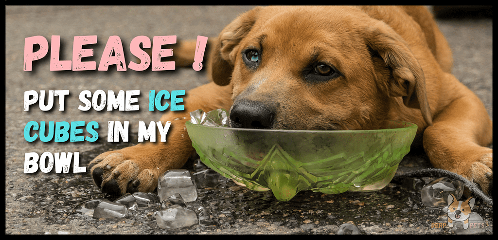How to keep a dog cool inside the house.