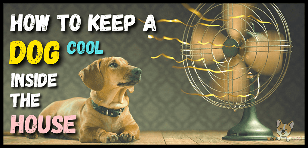 How to keep a dog cool inside the house