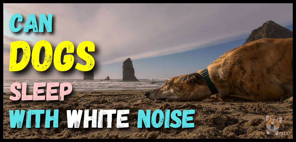 Can Dogs Sleep With White Noise