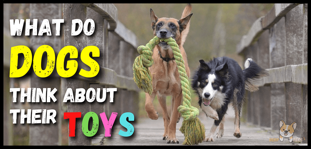 Do dog toys have a scent