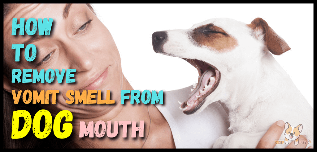 How To Remove Vomit Smell From Dog Mouth