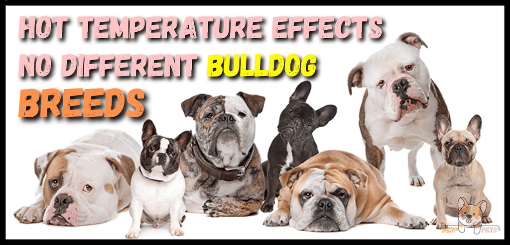 Can different Bulldogs Live In Florida