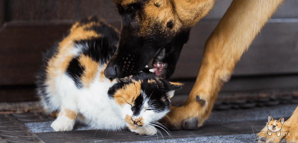 Do German Shepherds Eat Cats After Killing Them