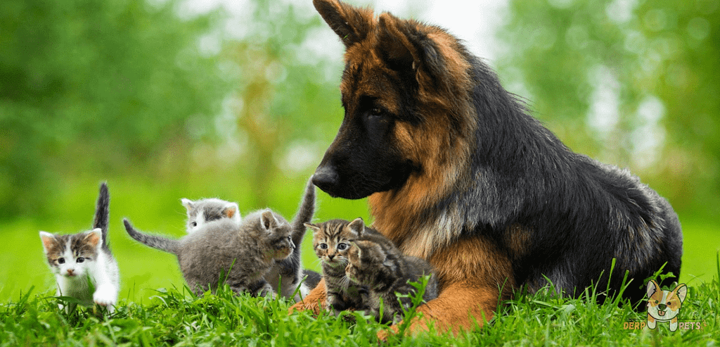 How To Train A German Shepherd Not To Go After Cats