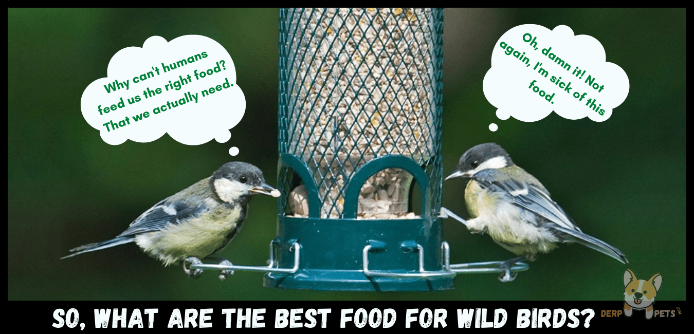 Best food for wild birds