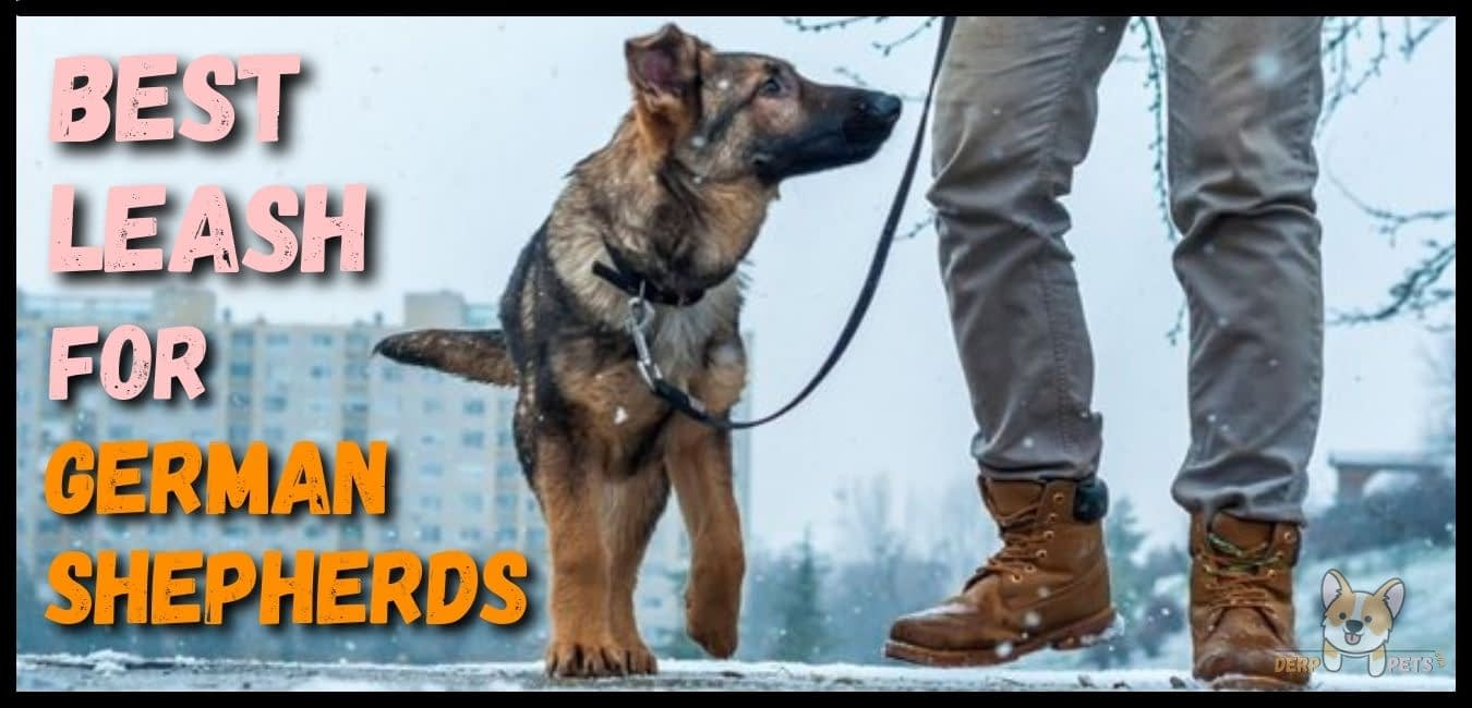 Best leash for german shepherds