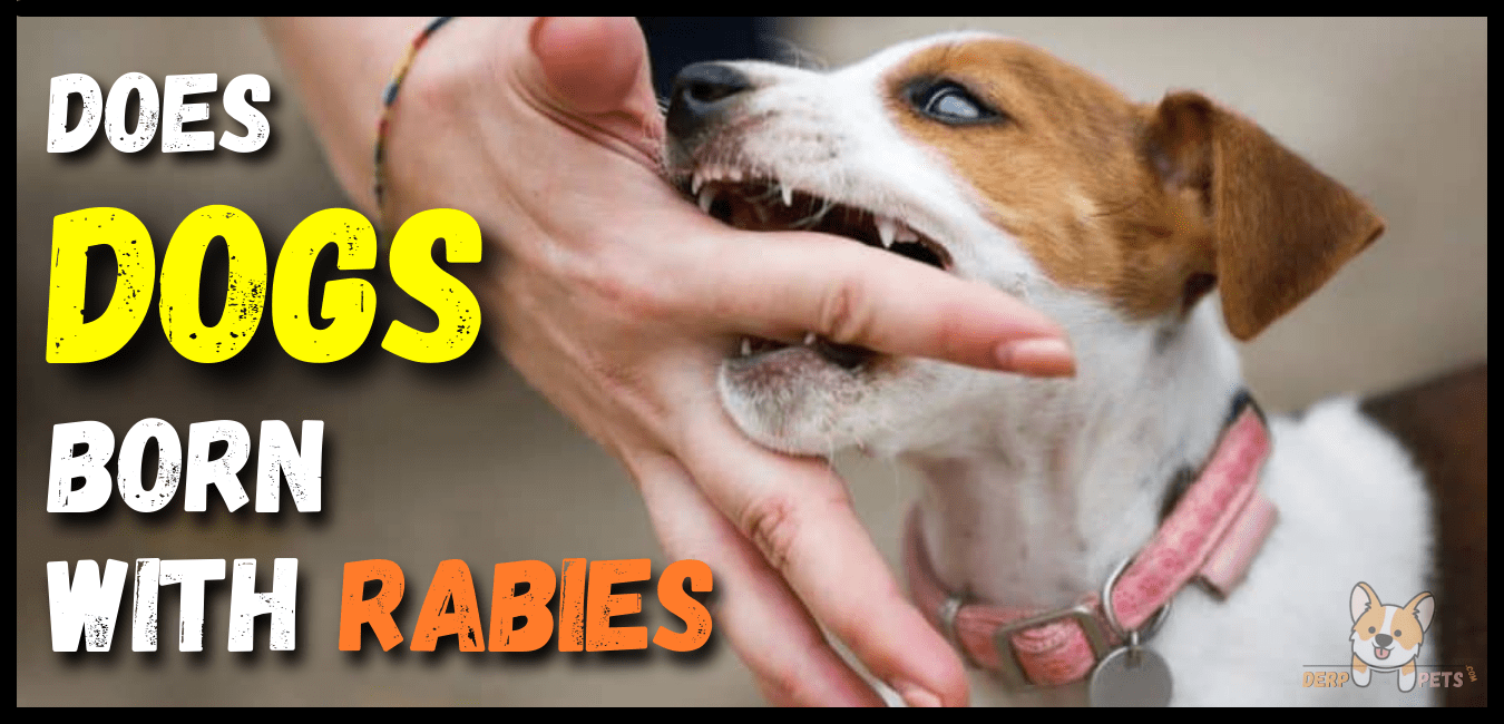 Does Dogs Born With Rabies