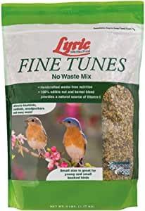 Best food for Wild Birds.