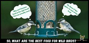 Best food for wild birds