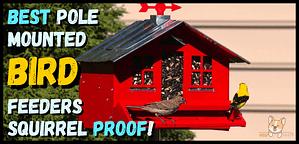 Best pole mounted bird feeders squirrel proof