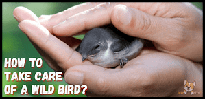 how to take care of a wild bird