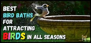 Best Bird Baths attracting birds