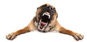 Low Maintenance Guard Dog Breeds