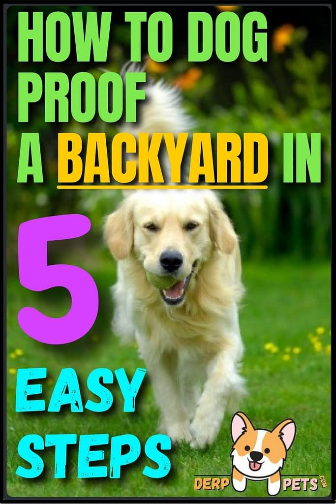 How to dog-proof a Backyard in 5 easy steps