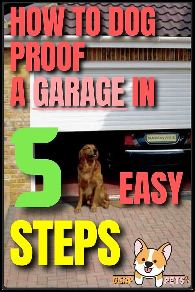How to dog-proof a Garage in 5 easy steps