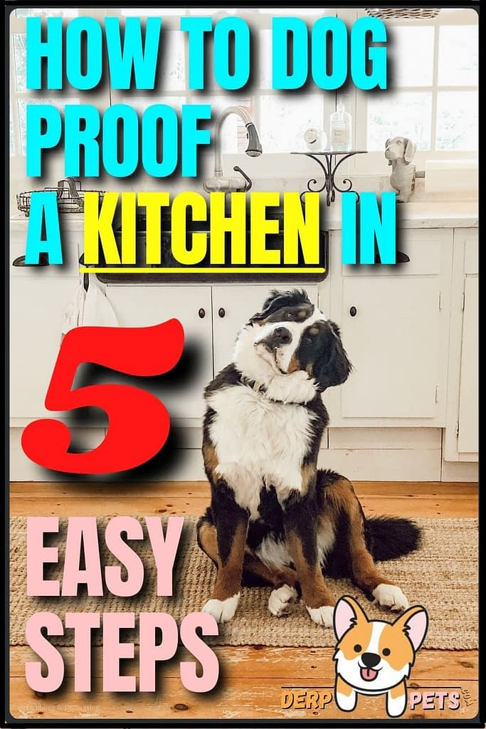 How to dog-proof a Kitchen in 5 easy steps