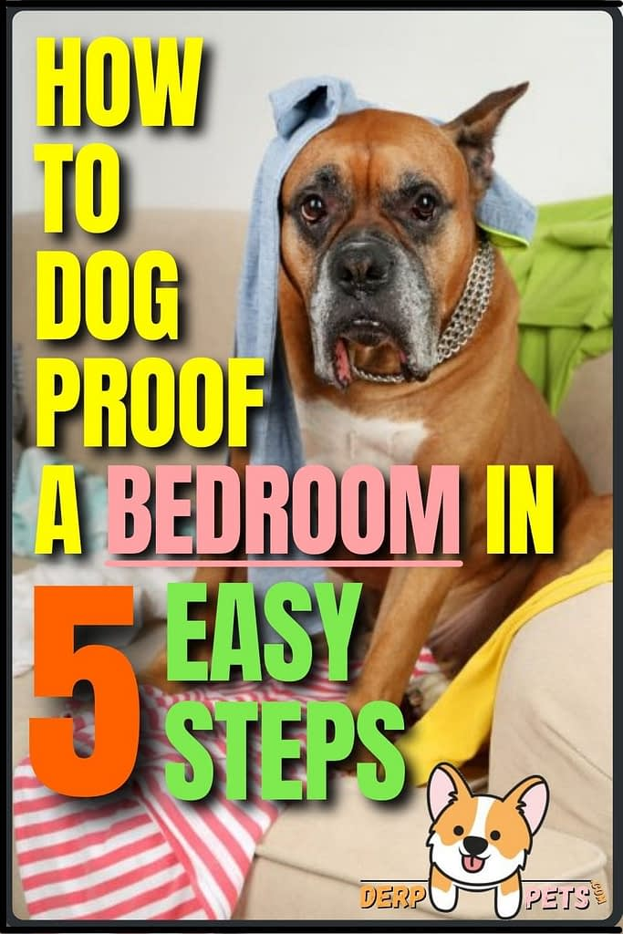 How to dog-proof a room - How to dog-proof a Bedroom in 5 easy steps
