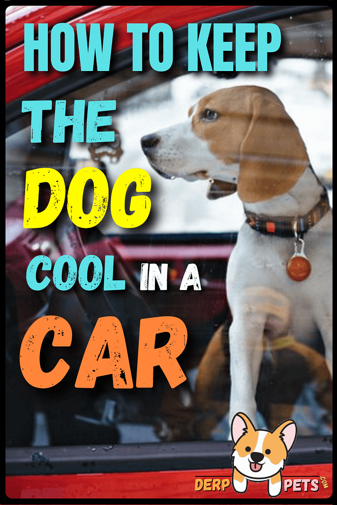 how to keep the dog cool in a car