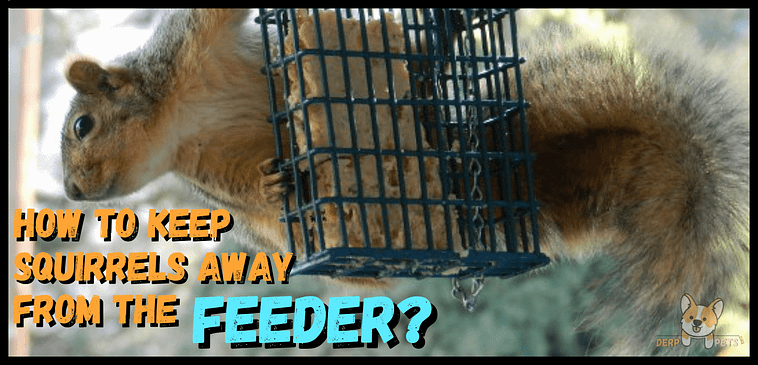 How to make bird suet with Crisco How to keep squirrels away from the bird feeder or suet feeder-min