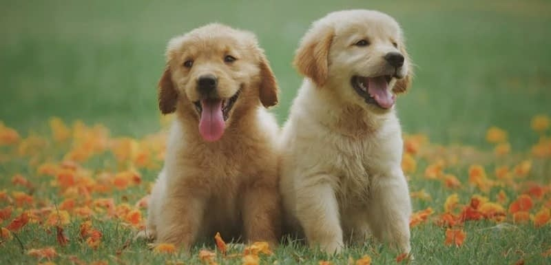 Are independent puppies good